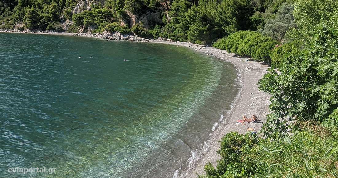 Το πράσινο αγκαλιάζει την παραλία Δάφνης στην Εύβοια