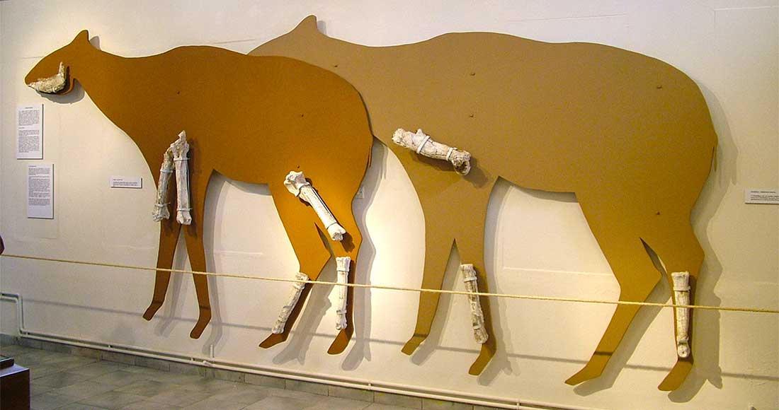 Μουσείο Απολιθωμένων Θηλαστικών της Κερασιάς