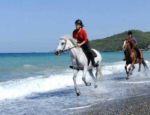 Δράση για παιδιά με θέμα τα ιπποειδή στην ζωή της Ελληνικής αγροτικής οικογένειας στην Αγία Άννα 🗓