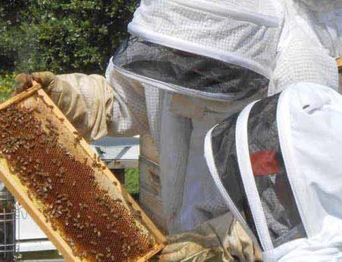 Δωρεάν τριήμερες Εκπαιδεύσεις Μελισσοκόμων στην Αρτάκη