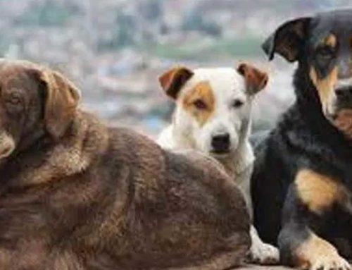 Χρηματοδοτούνται δημοτικά καταφύγια για τη φροντίδα αδέσποτων ζώων