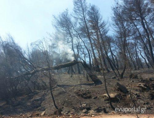 Στάχτη 25.000 στρέμματα δάσους, τεράστια η οικολογική καταστροφή