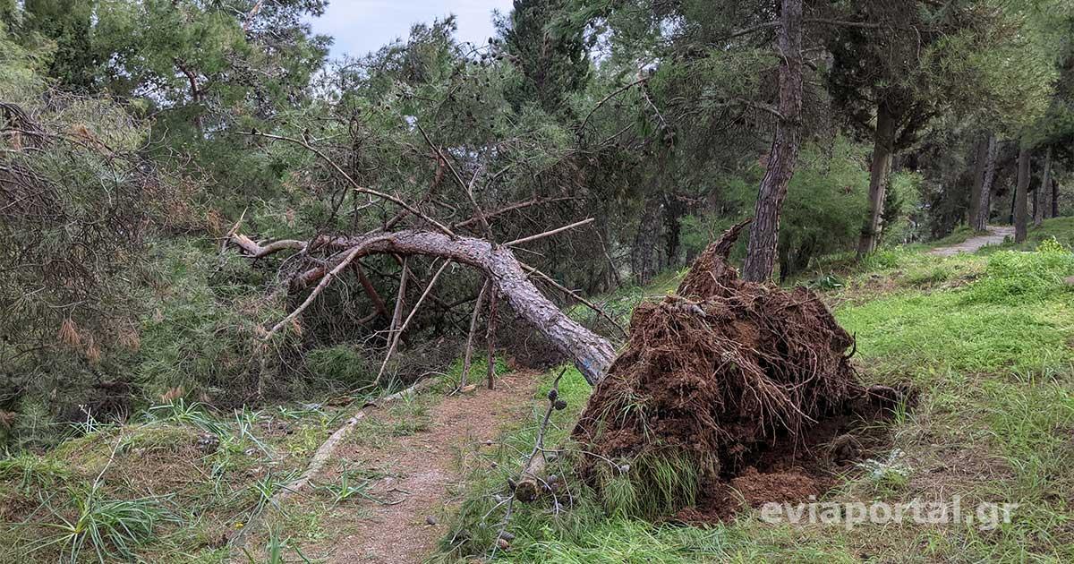 Κακοκαιρία Μήδεια - Πτώσεις δέντρων - Κάστρο Κανήθου