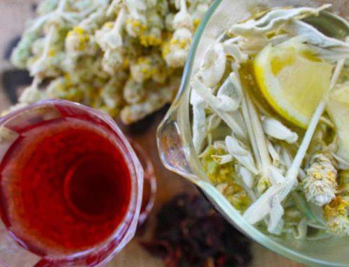 Φτιάξε δροσερό και τονωτικό τσάι της Εύβοιας, με μέλι και λεμόνι για το μπαλκόνι